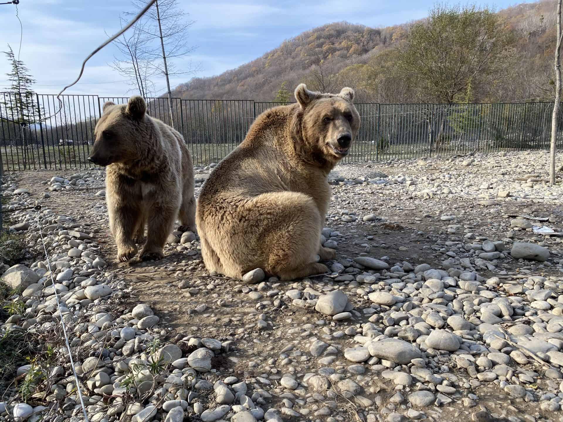 დათვების თავშესაფარი