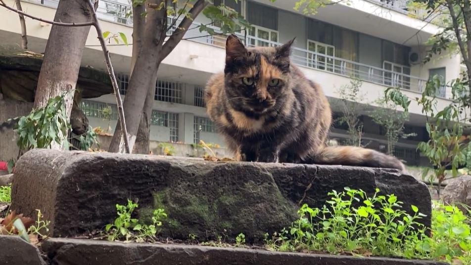 უსახლკარო კატები