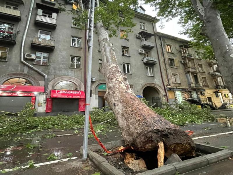 ლადო კავსაძის ქუჩაზე ხე წაიქცა