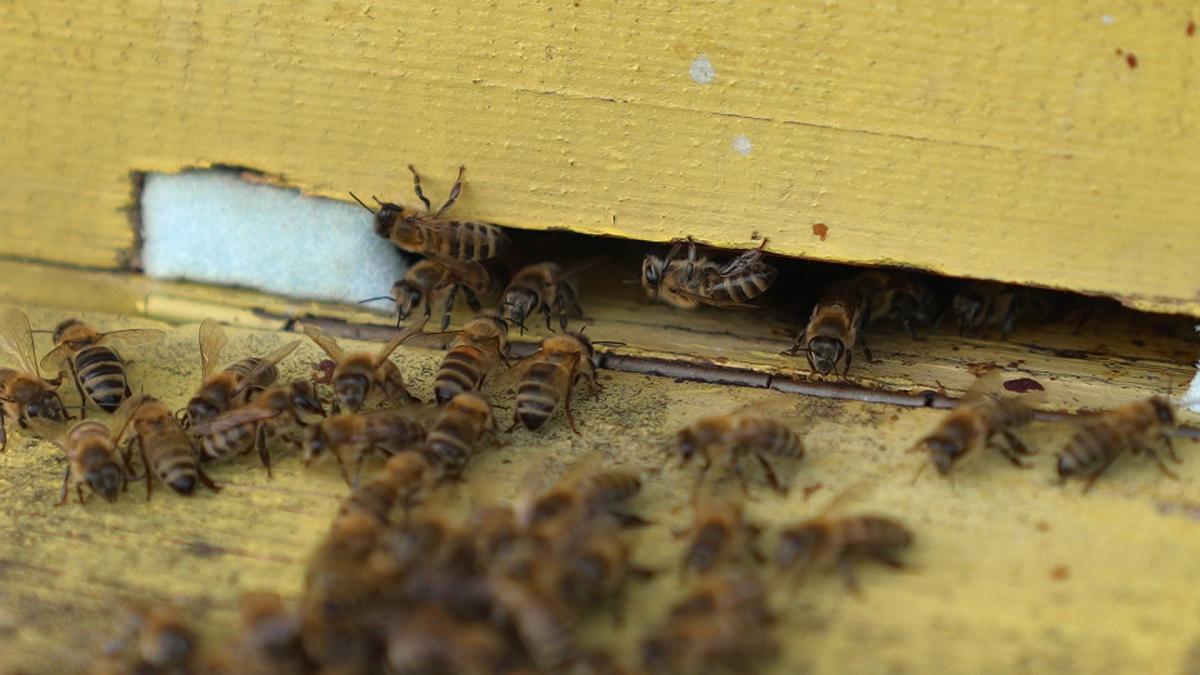 ფუტკარი და გარემო